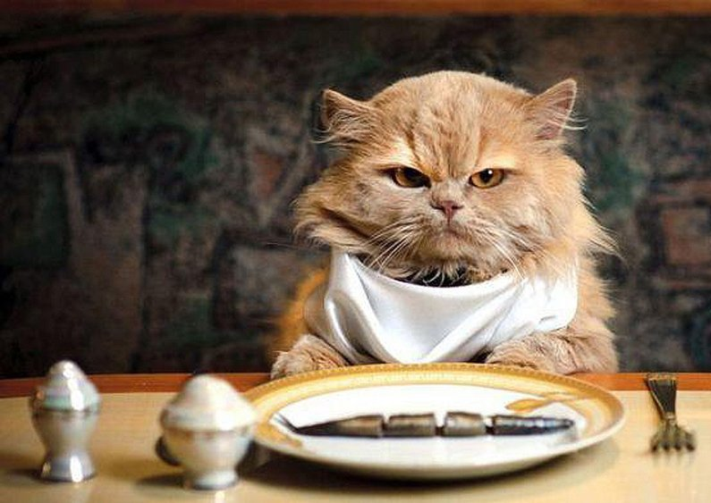 fotos-migatoesunico-comida-para-gatos