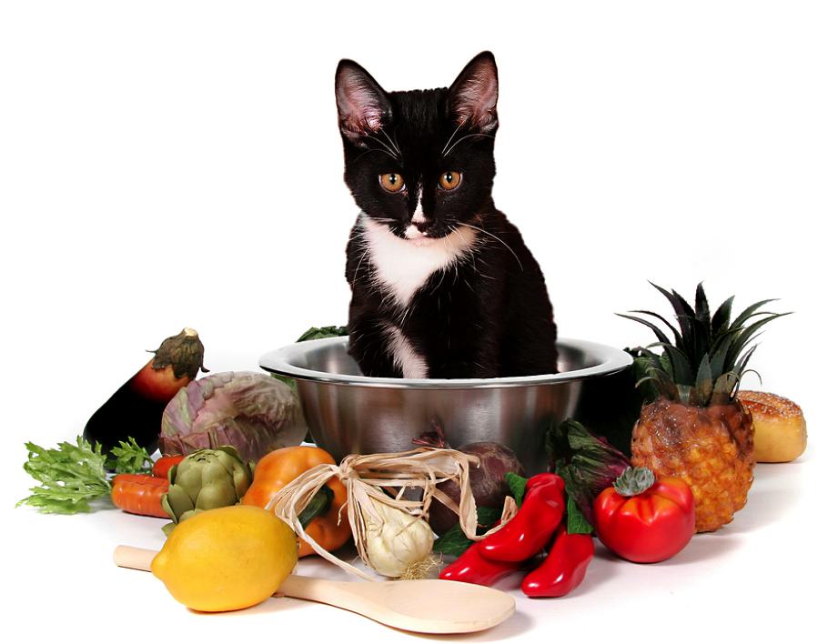 Factores nutricionales para mi gato