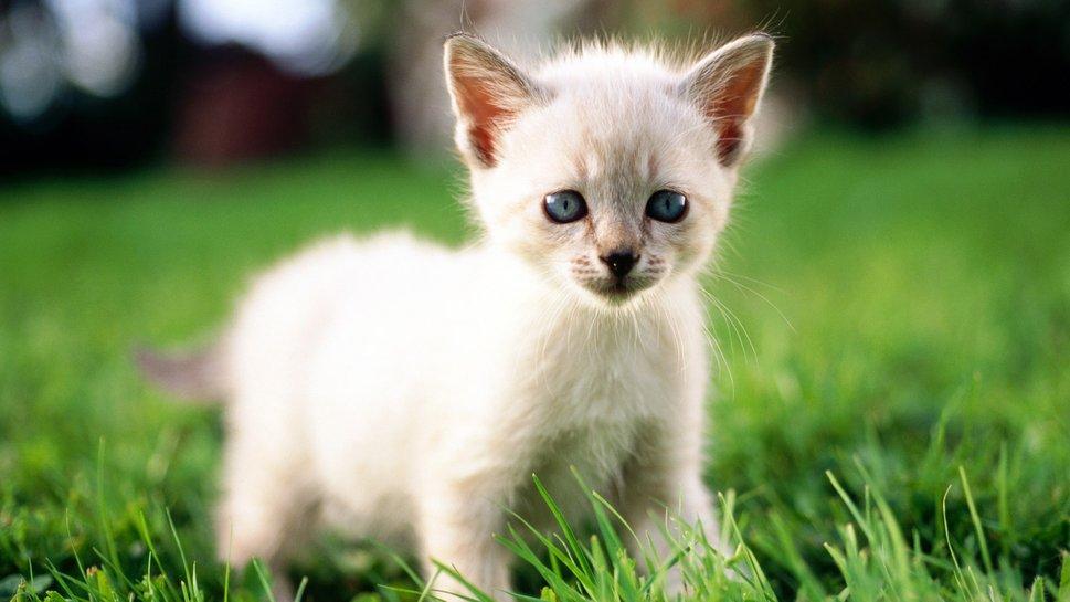 fotos-migatoesunico-me-he-encontrado-un-gato-pequeño