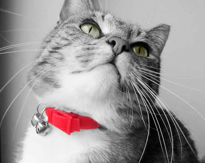 Gato con dos cascabeles