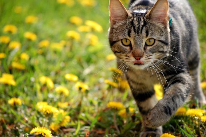 gatos territoriales