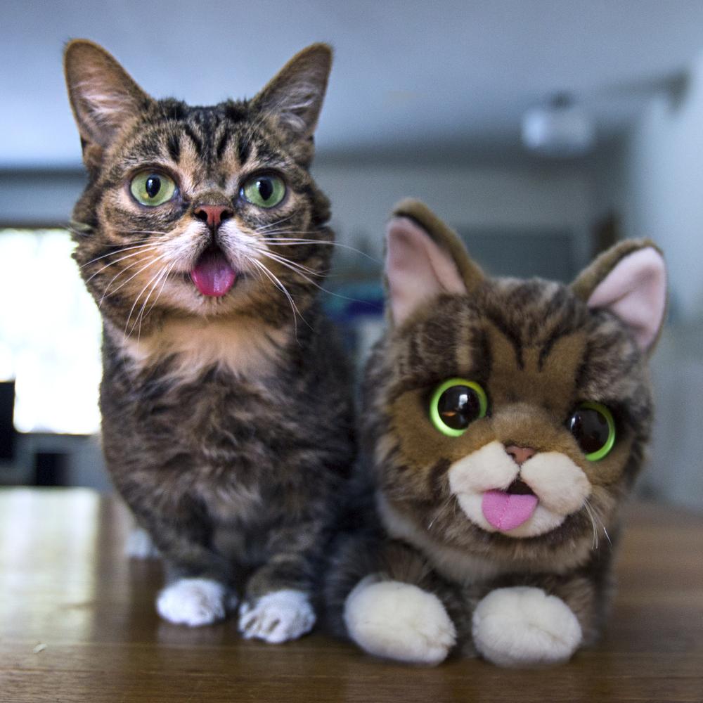 Lil Bub la gata más especial