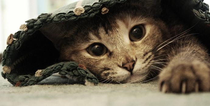 gato en una alfombra
