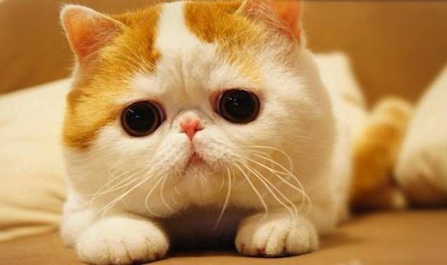 snoopy babe gato famoso