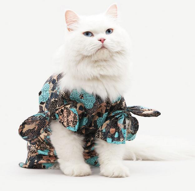 los-gatos-y-la-moda