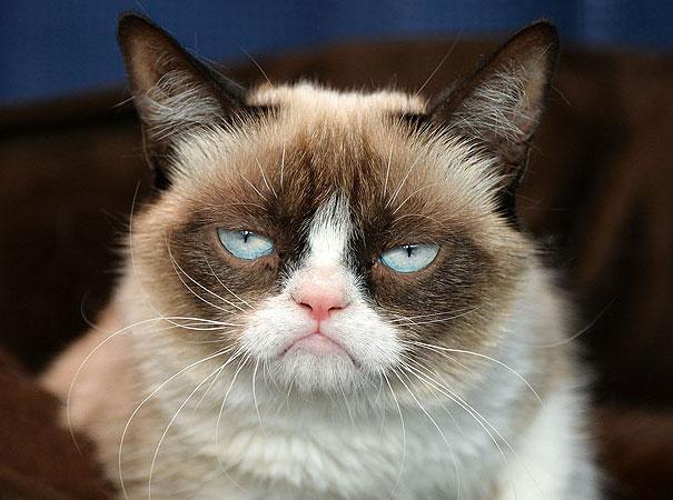 7-Grumpy-migatoesunico