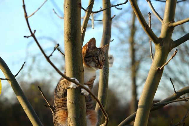 gato-en-arbol-migatoesunico