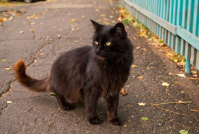 gato-negro-migatoesunico