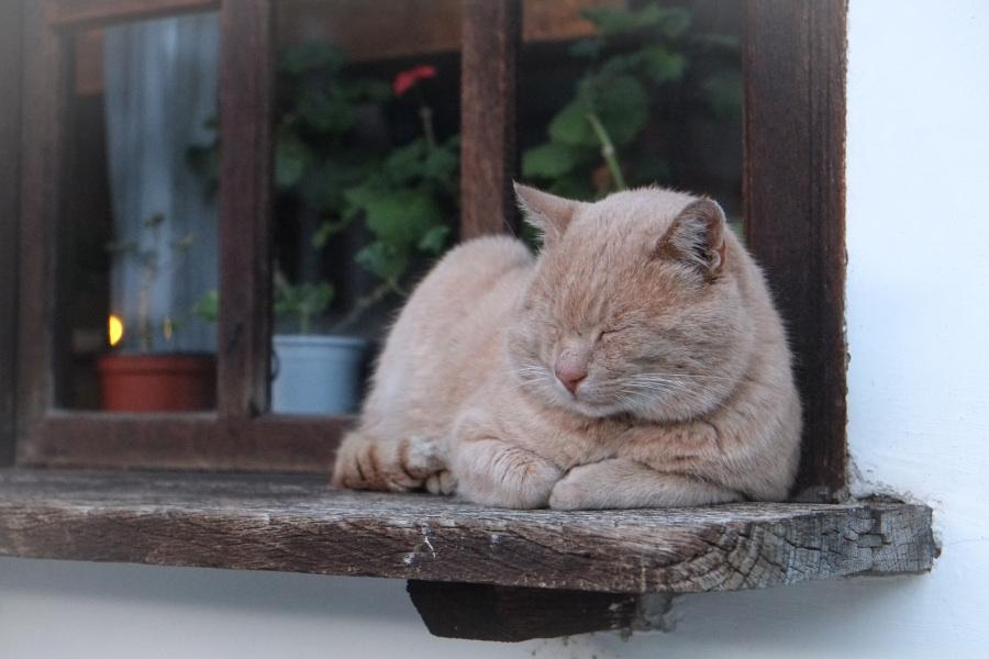 migatoesunico-gatete-durmiendo