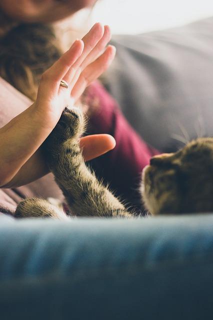 migatoesunico-gato-amor