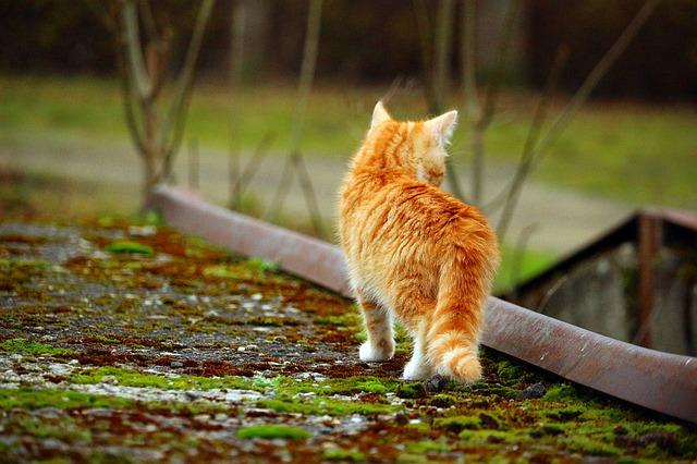 migatoesunico-gato-cazando-petit