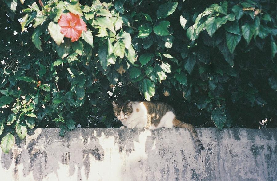 migatoesunico-gato-solitario
