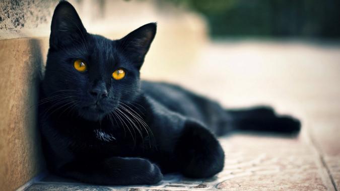 fotos-migatoesunico-gatos-negros
